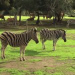 A day out at Werribee Zoo